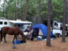 horse camping.jpg