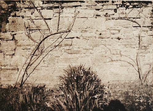 'Snowdrops', Regina Richardson