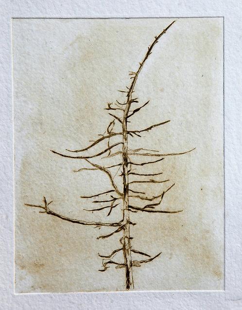 'Lone tree in Glendalough', Pamela de Brí