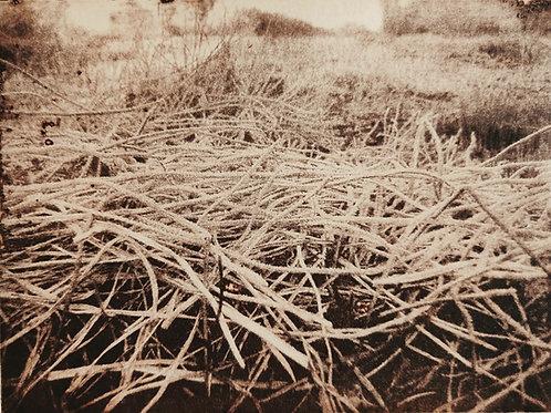 'Protection (Walled Garden series)', Regina Richardson