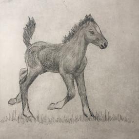 Happy Foal