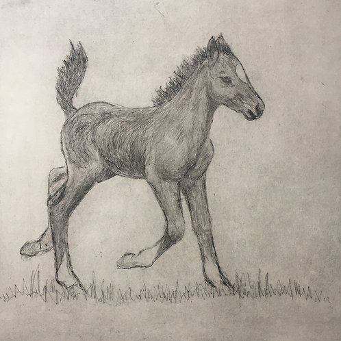 'Happy Foal', Mary McGrath