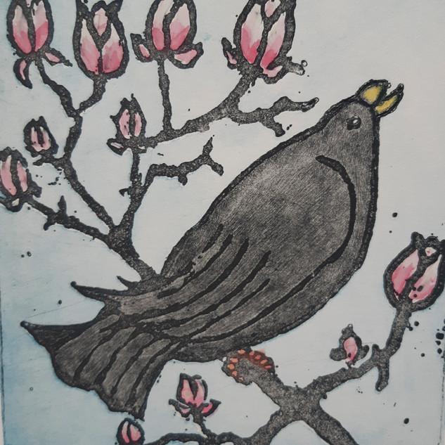 Blackbird with Magnolia 2