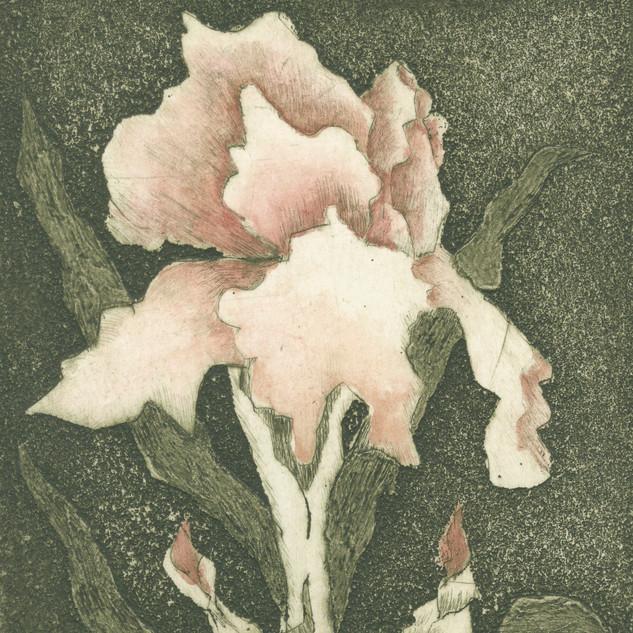 Botanic Bloom