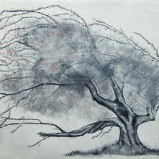 """""""Fairy Tree"""", Etching, Edition of 20, 25 x 36cm, Katie Walshe"""