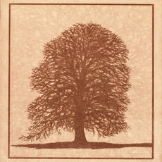"""""""The Autograph Tree Coole Park"""", Etching, 21 x 20cm,  Edition of 20, Aidan Flanagan"""