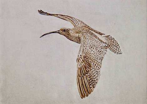 'Curlew 1', MaryMcGrath