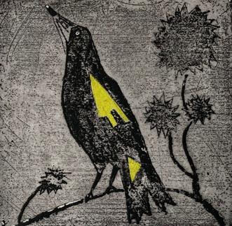 Yellow Magpie