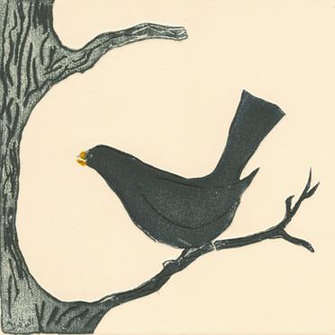 Blackbird of Duaire