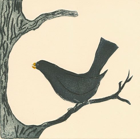 Blackbird of