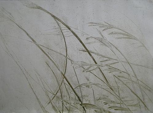 'Willow', Hilary Kinahan