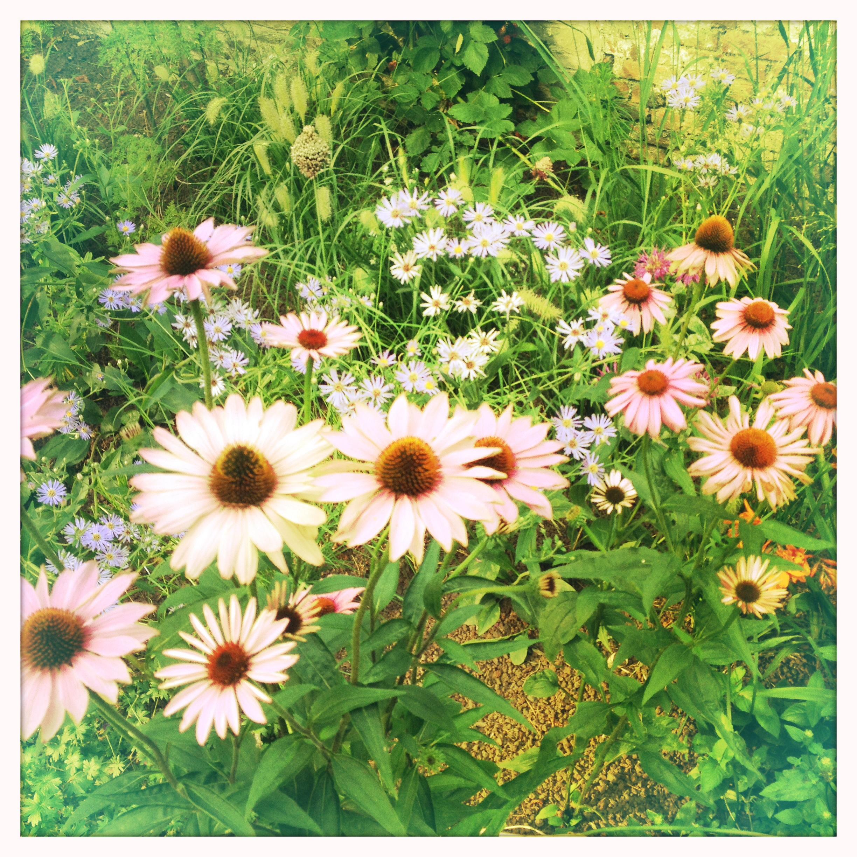 Flowerbed Quatre20cinq