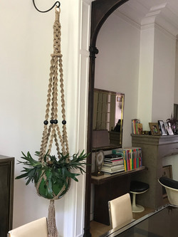 plant hanger with Staghorn fern
