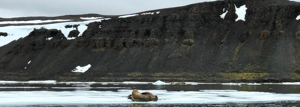 Geographer Bay, Prince George Land, Franz Josef Land