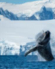 Enterprise-Antarctique©StudioPONANT-Oli