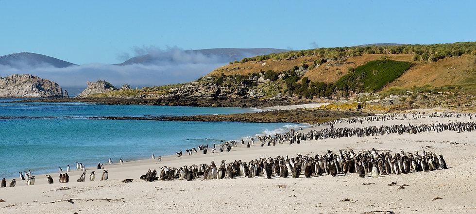 10天福克兰群岛深度游