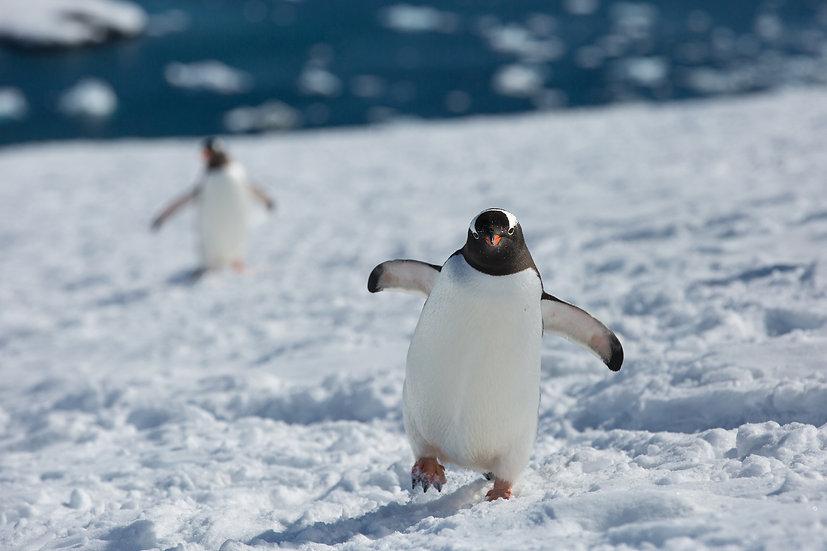 12 Nights Antarctica Peninsula and Antarctic Circle Expedition