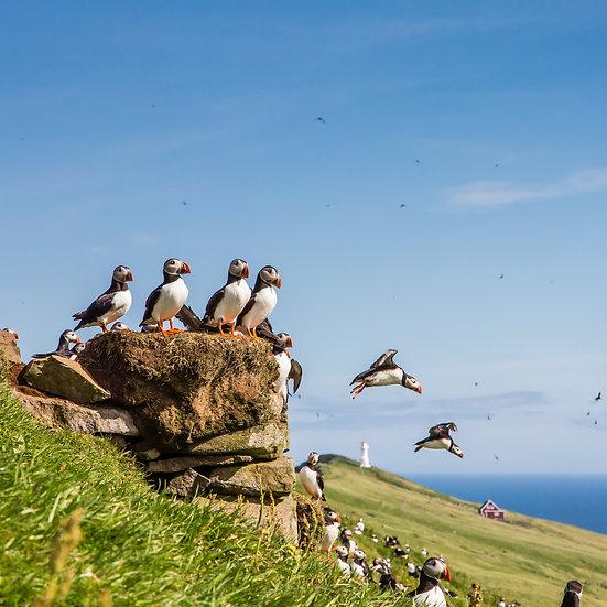 12 Nights Legendary Northern Isles: Scotland, Faroes & Iceland