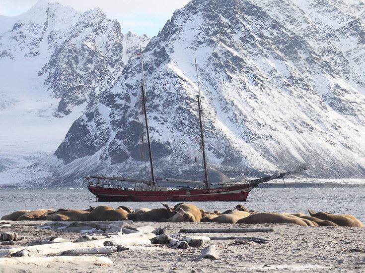 7 Nights Central Spitsbergen, Arctic Spring