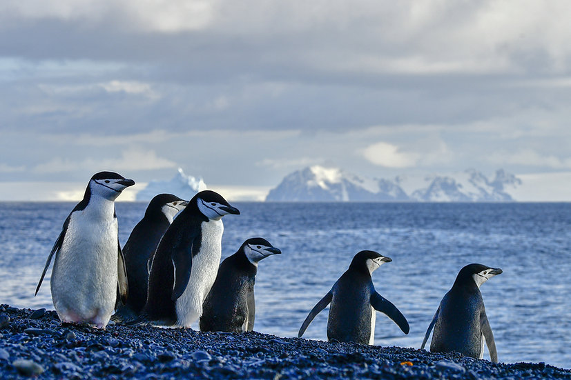 14 Nights Cross the Antarctic Circle