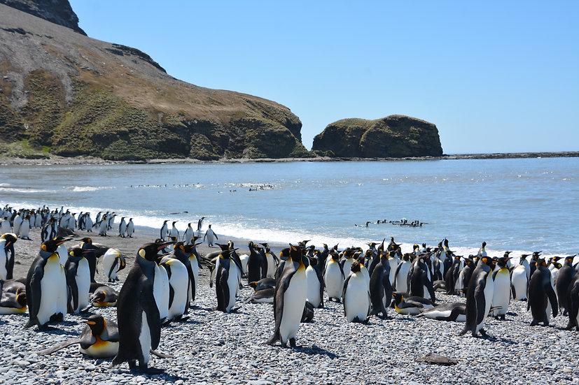 19 Nights Antarctica, South Georgia & Falklands