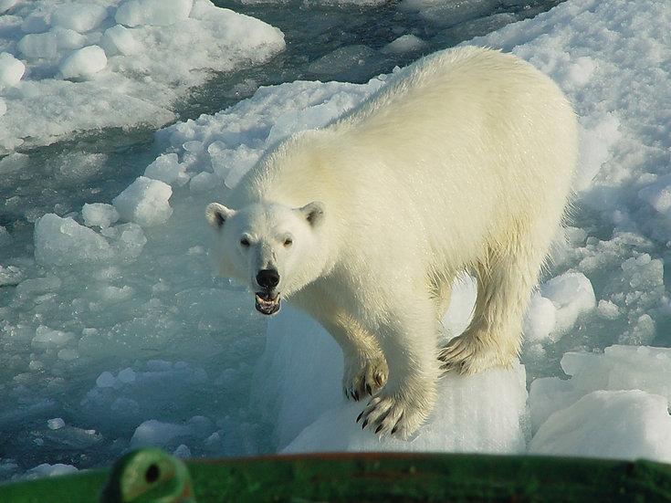 8 Nights Arctic Wildlife Safari