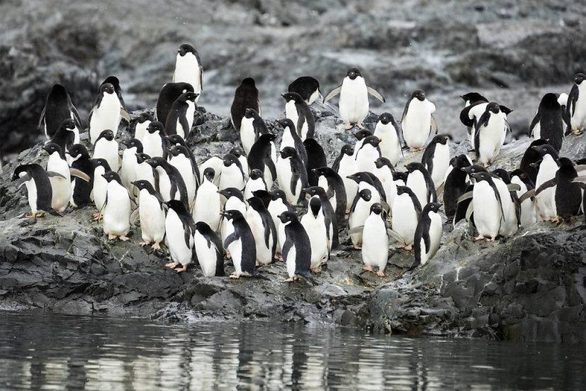 11天南极半岛先锋探索之旅