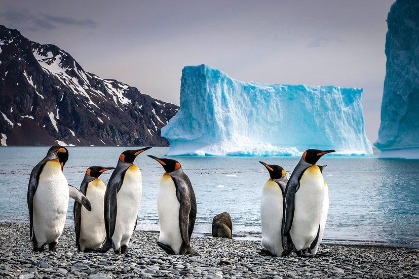 18/20/21 Nights South Georgia, Falkland & Antarctic