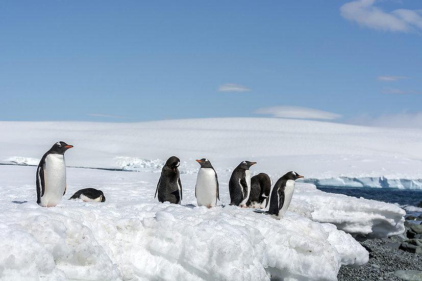 18 Nights Antarctica, Falkland and South Georgia Voyage