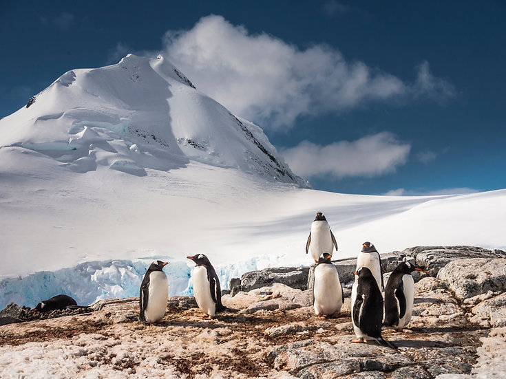 13 Nights Antarctica - Polar Circle, Deep South Discovery and Whale Watching