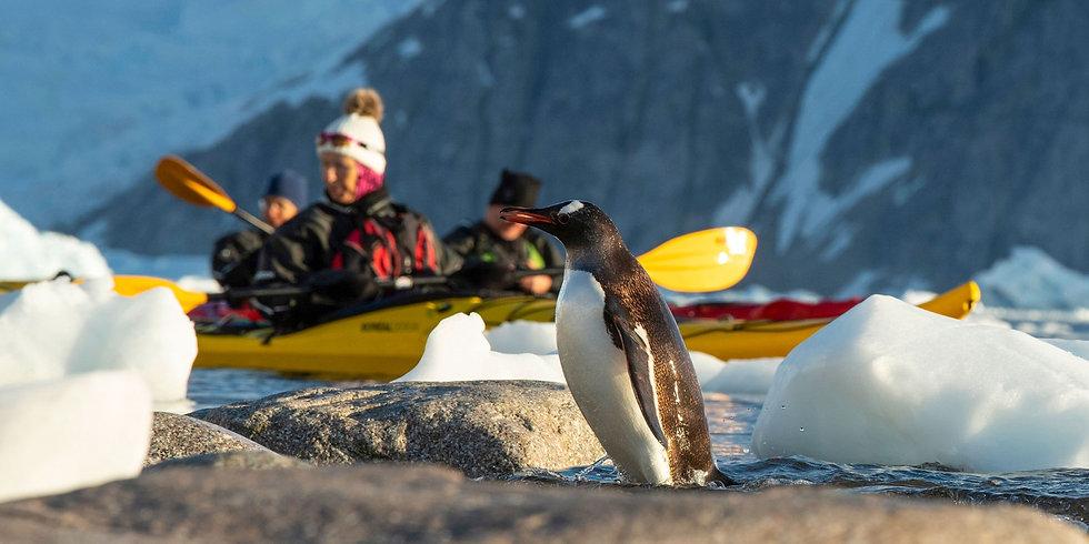 15 Nights Antarctica & Falklands Expedition