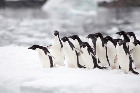 13 Nights Uncharted Antarctica: East and West Peninsula