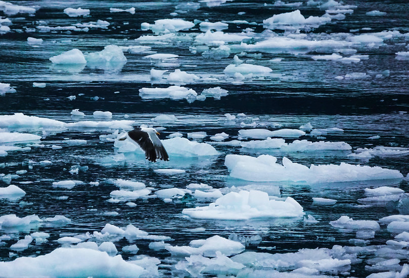 9 Nights Antarctica Discovery