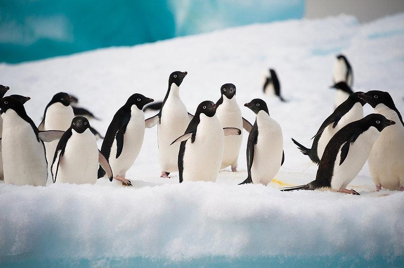 11/12 Nights Across the Antarctic Circle