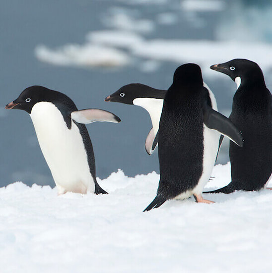 5/6 Nights Antarctica Express Air Cruises