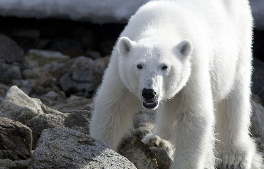 7 Nights North Spitsbergen, Arctic Spring