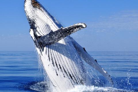 10 Nights Antarctica Whale Journey