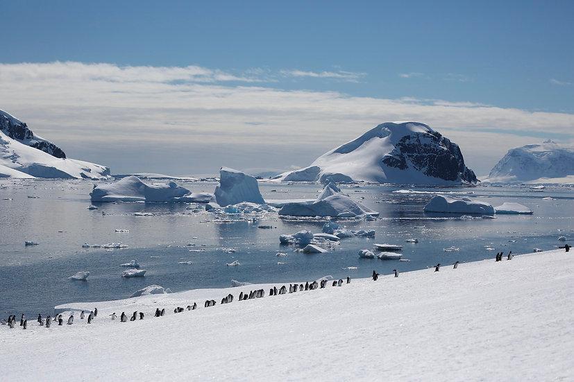 10 Nights Antarctic Peninsula with South Shetland Islands