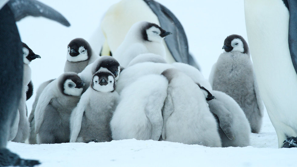 9 Days Emperors Penguins Expedition