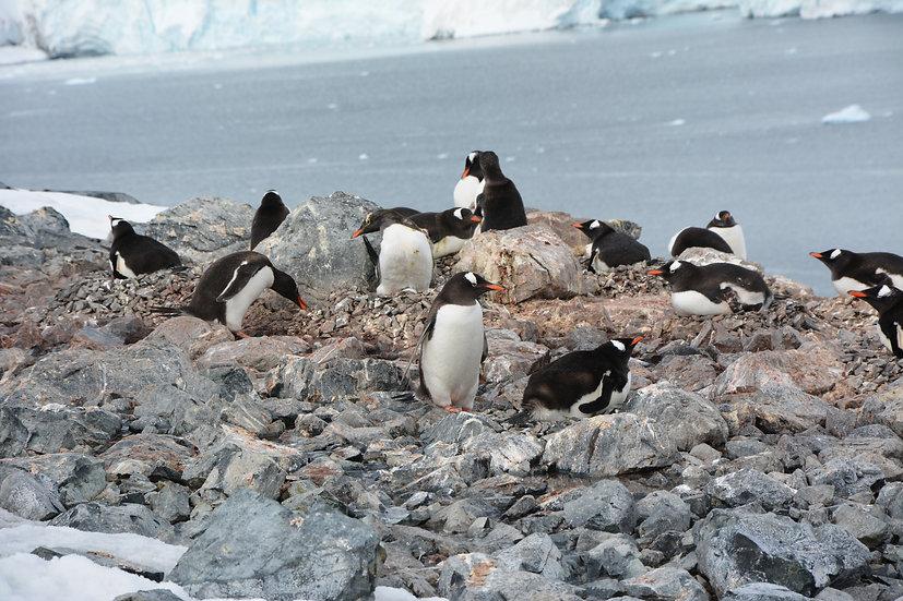 Special Deal: 9 Nights South Shetland and Antarctic Peninsula