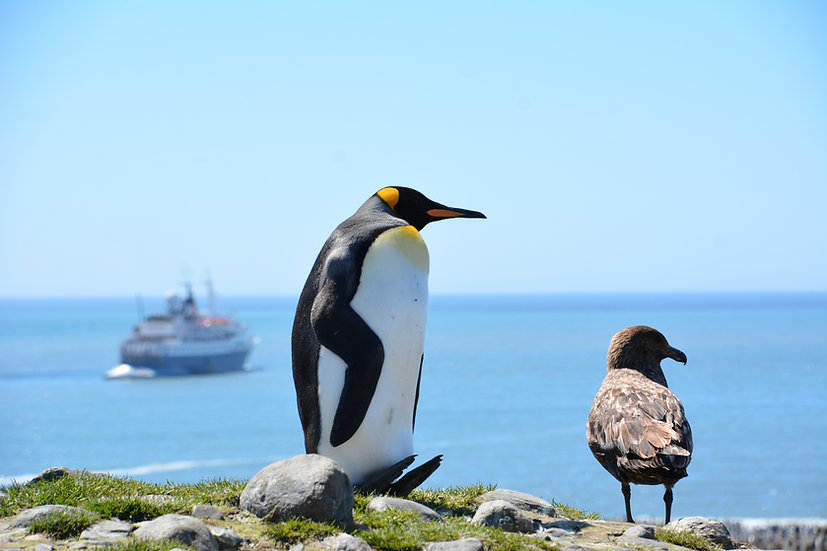 14 Nights Falklands and South Georgia In Depth