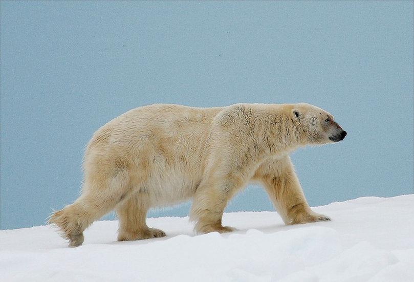 7 Nights The Best of Spitsbergen