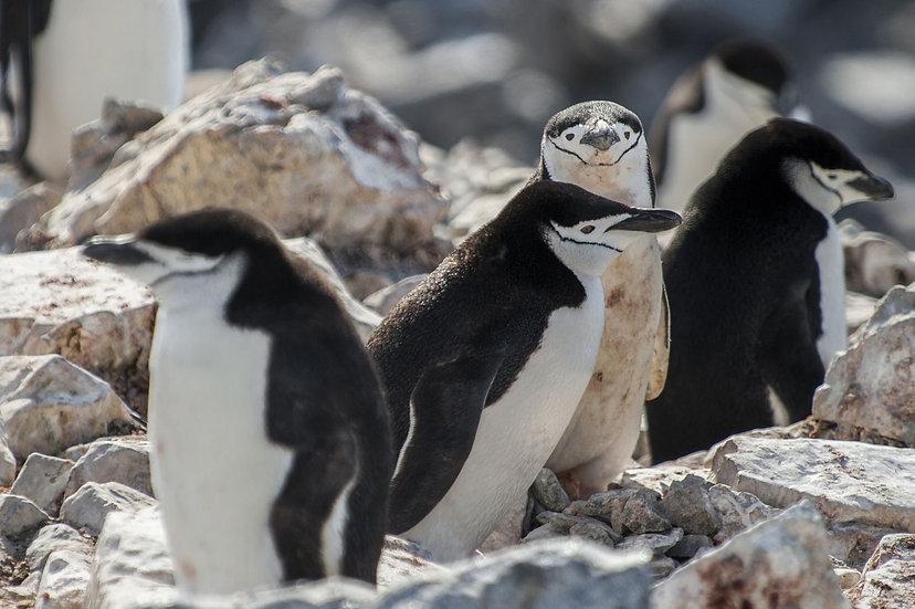 11 Nights Polar Circle - Antarctic Peninsula