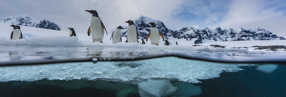 10 Nights Antarctic Peninsula & Weddell Sea