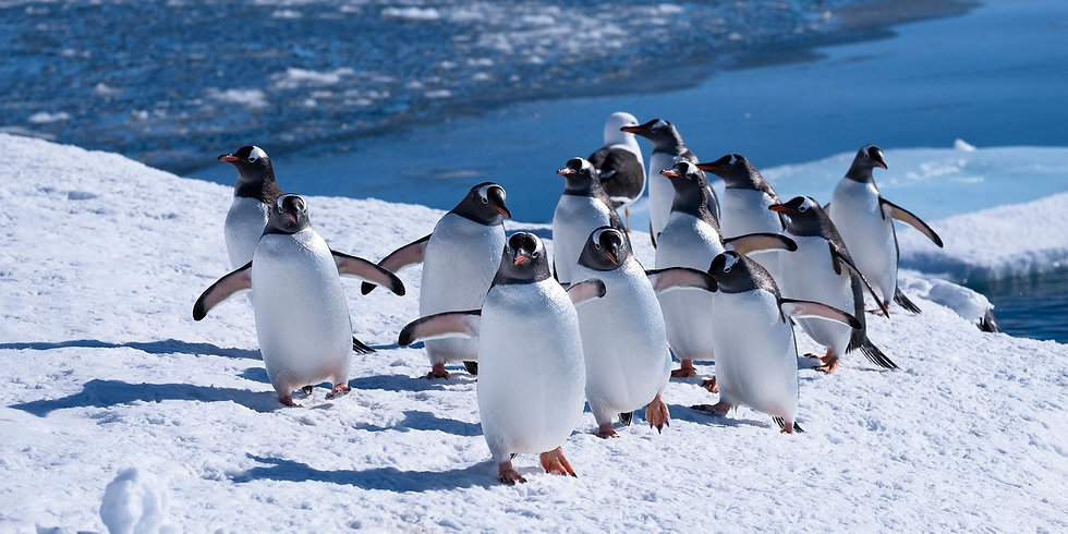 11 Nights Highlights of Antarctica