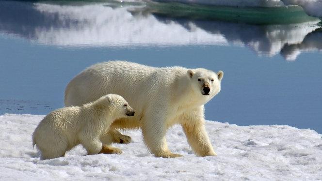 斯瓦尔巴德峡湾冰川和野生动物10日游