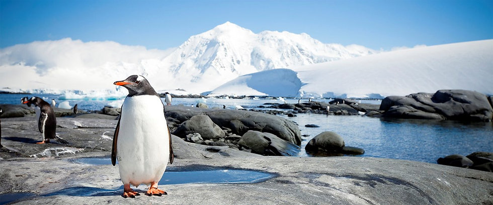 11 Nights Antarctica In Depth from Buenos Aires