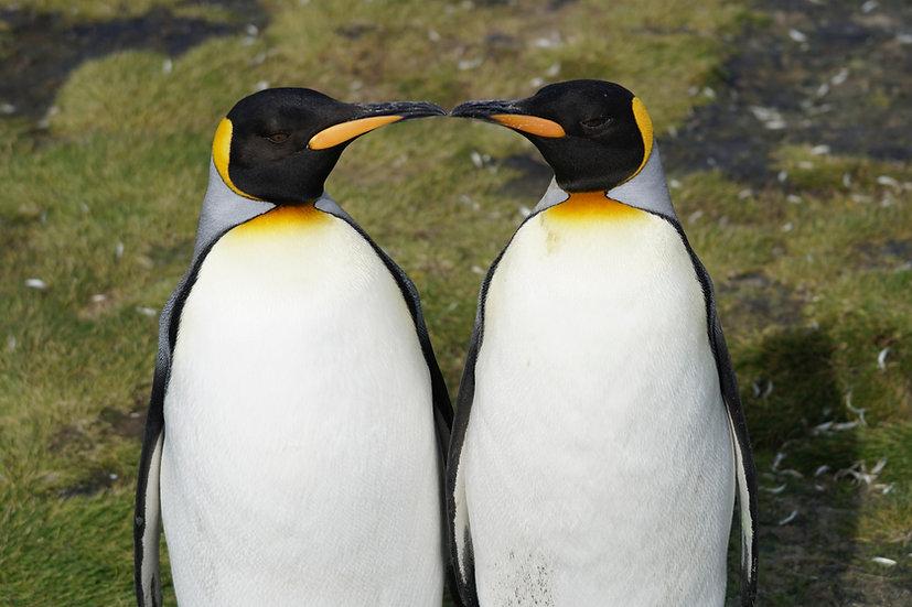 20天南极三岛布宜往返探险游