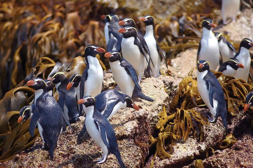 10 Nights Beyond Fiordland: New Zealand's Wildest Islands