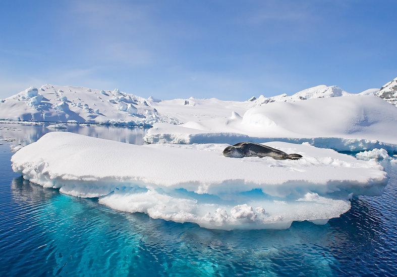 10 Nights Antarctic Peninsula and South Shetland Islands